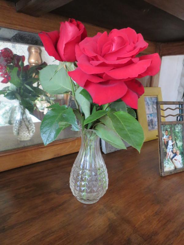 Une rose pour maman